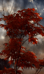 Red Rainy tree Live Wallpaper screenshot 2/3