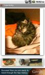 Cute Kitty screenshot 1/3