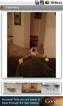 Cute Kitty screenshot 3/3