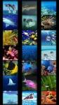 Fish Wallpapers screenshot 2/5