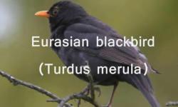 Bird sounds and videos screenshot 2/5