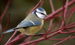 Bird sounds and videos screenshot 3/5
