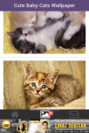 Free Cute Baby Cat Wallpaper screenshot 2/6