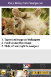 Free Cute Baby Cat Wallpaper screenshot 3/6