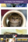 Free Cute Baby Cat Wallpaper screenshot 4/6