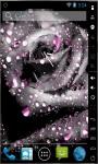 Gorgeous Grey Rose Live Wallpaper screenshot 1/2