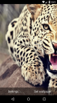 Beautiful Leopard Live Wallpaper HD screenshot 1/6