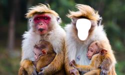 Funny Monkey Photo Montage screenshot 4/6