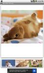 Adorable Pet Zoo screenshot 2/3