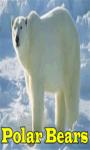 Polar Bears screenshot 1/3