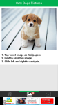 Cute Dogs Pictures screenshot 3/6