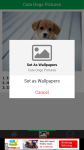 Cute Dogs Pictures screenshot 4/6