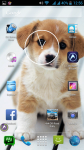 Cute Dogs Pictures screenshot 6/6