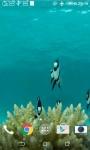 Fish HD Live Wallpaper screenshot 1/4