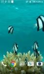 Fish HD Live Wallpaper screenshot 3/4