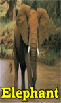 Elephant Lite screenshot 1/3