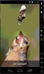 Thirsty Bird Live Wallpaper screenshot 1/2