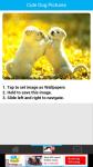 Cute Dog Pictures screenshot 3/6