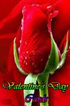 Valentines Cards screenshot 1/4