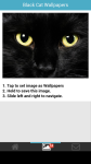 Black Cat Wallpapers screenshot 3/6