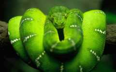 Free HD Snake Reptile Animal Wallpaper for Android screenshot 1/6