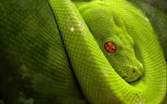 Free HD Snake Reptile Animal Wallpaper for Android screenshot 4/6