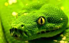 Free HD Snake Reptile Animal Wallpaper for Android screenshot 5/6