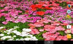 Amazing Flowers screenshot 4/6
