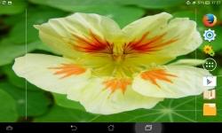 Amazing Flowers screenshot 5/6