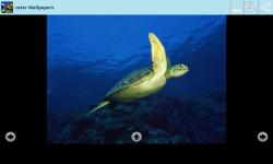 Magical Underwater Wallpapers screenshot 5/6
