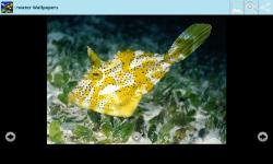 Magical Underwater Wallpapers screenshot 6/6