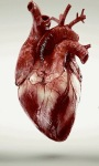 Beating Live Heart Live Wallpaper screenshot 1/3