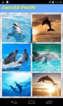 Dolphins Jigsaw Puzzle HD screenshot 1/4