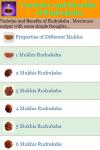 Varieties and Benefits of Rudraksha screenshot 2/3