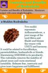 Varieties and Benefits of Rudraksha screenshot 3/3