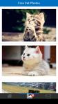 Free Cat Photos screenshot 2/6
