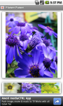 Flower Power FREE screenshot 2/3