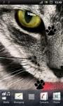 Grey Cat Live Wallpaper screenshot 1/3