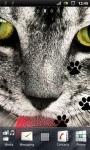 Grey Cat Live Wallpaper screenshot 2/3