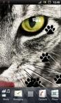 Grey Cat Live Wallpaper screenshot 3/3