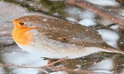 Winter Bird Live Wallpaper screenshot 2/3