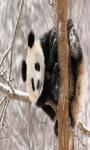 Panda Live Wallpaper Best screenshot 3/4