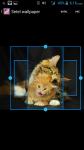 Free Kitten Wallpapers screenshot 3/4
