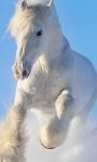 Horse Wallpapers app screenshot 1/3