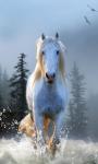 Horse Wallpapers app screenshot 2/3