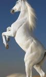 Horse Wallpapers app screenshot 3/3