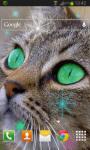 Cat Star Live Wallpaper screenshot 2/2