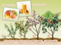 Baby Plants Fruits 2 screenshot 2/5