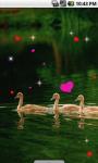 Ducks Family Live Wallpaper screenshot 2/4
