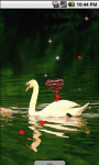 Ducks Family Live Wallpaper screenshot 3/4